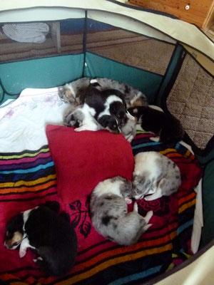 Mittagsschlaf im Zelt