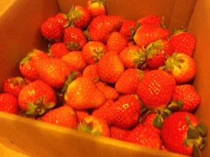 佐賀県 イチゴ いちご