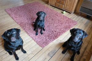 Akeelah, Bailey und Anjou