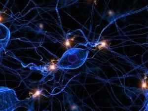 Hormone sind biochemische Botenstoffe, die von spezialisierten Zellen produziert werden und bestimmte Aufgaben an Organen verrichten.