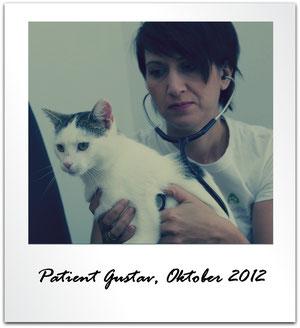 Christina Pfülb, Prakt. Tierärztin, Waldfenster