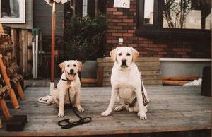 札幌犬可愛いウッドデッキ