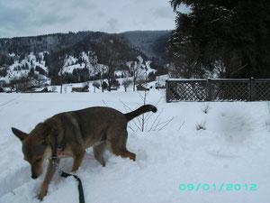 Alina im Schnee