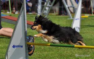 2013 in Lauffen Jumping 1.Platz