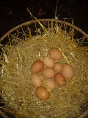 Ein Nest mit schönen Eiern