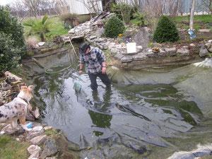 Nachdem ein Teil des Wasser abgelasse ist, müssen die Fische in Sicherheit gebracht werden.