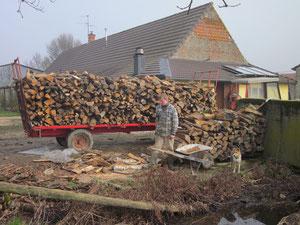 Die zersägten Teile bringt Simon in den Holzschopf.
