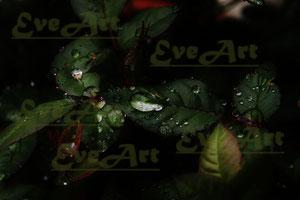 Rosenblätter grün