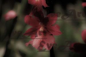 Orchidee 7