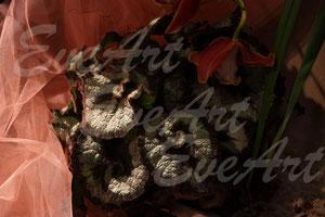 Rosa Blätter