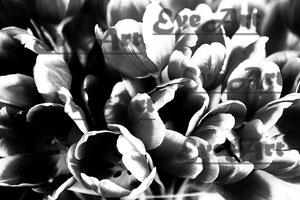 Tulpen s/w