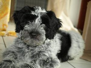 10 Wochen alt Cookie