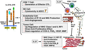 IL-27の抗腫瘍効果