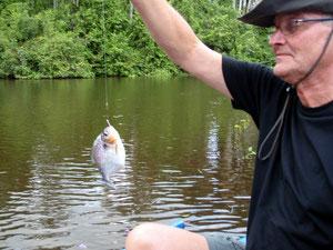 Piranha....am Orinoco gefangen