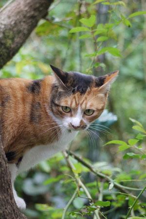 2012・10柿の木に登るは~