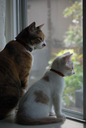 2012・8親子のようなネコたち