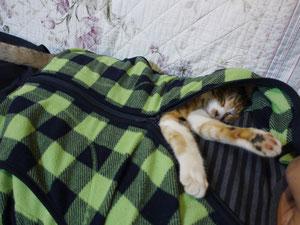 子ネコの湯たんぽ 11月12日