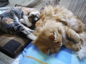眠る二人・・・ではなく二匹 11月17日