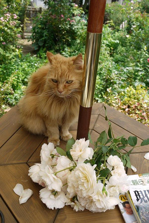 バラがよく咲きましたね~