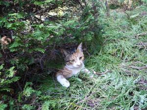 この木の中、楽しかったよ~・・・ここで首輪外れたのね~