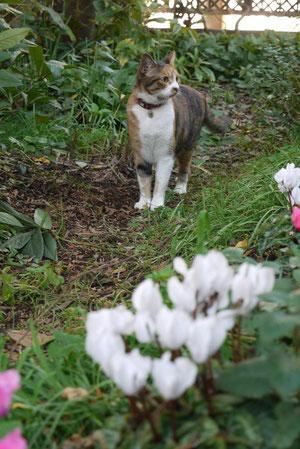 今日はお母さんが庭仕事なので一緒に遊んでます。11月24日