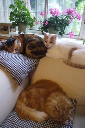 2013年5月三匹のネコたち