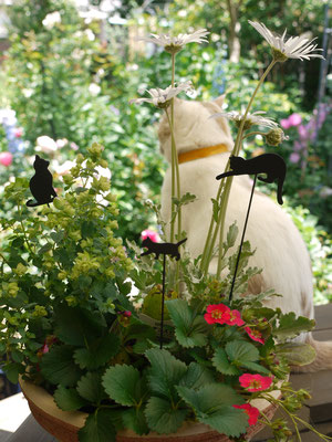 2013・5平塚の庭にてフク