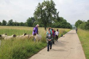 Besuch bei einer Schafherde