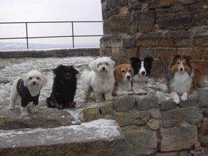 Lia, JJ, Duke, Gunda, Bailey, Gizmo