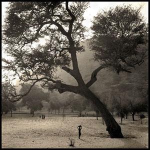 Telli, Pays Dogon, Mali, 2008