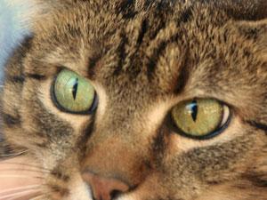Katzenleid verhindern