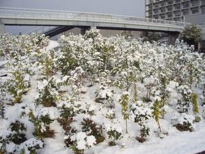 銀世界のchinjunomori、雪化粧です。22年1月6日