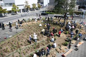 小さい可愛い苗たちが23種1439本が、みんなの手で森(Chinjunomori)になりました。