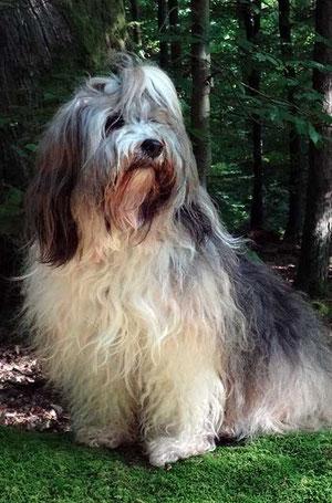Milka, Königin des Waldes
