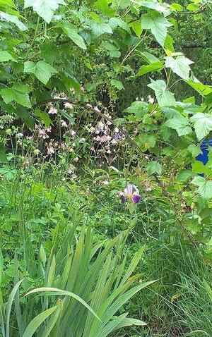 Unser Garten im verregneten Mai 2013