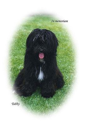 Tabby als Junghund