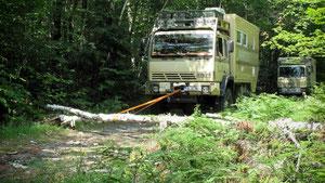 Holzfällerarbeiten