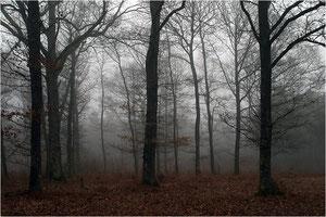 Brume en sous bois