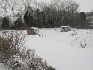mars 2013   sous la neige