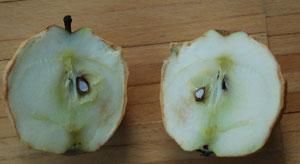 Experimente mit Apfel