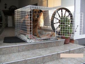 Hundebox für Auto