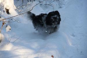 Ich liebe den Schnee