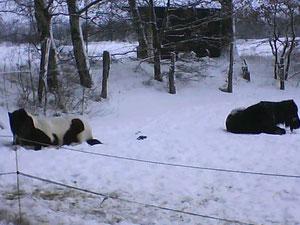 sich im Schnee zu wälzen macht im Duett noch mehr Spaß!
