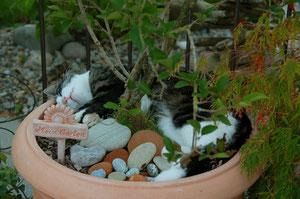 der eigene Garten :-)