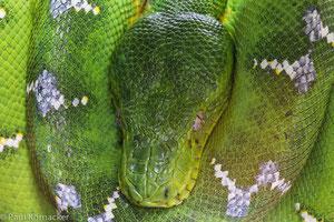 Reptilienfotografie, Schlangen