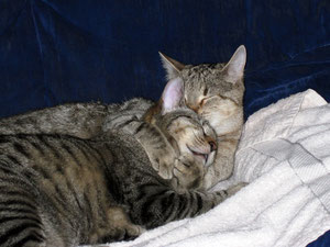 Katzenbetreuung vor Ort