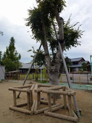 木のぼりができる大きな樹