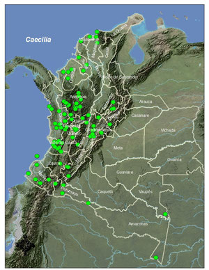 Distribución del género en Colombia