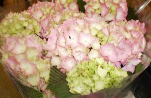 桐生 アジサイの花
