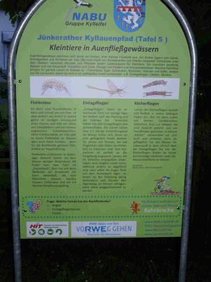 Auentafel zur Kleintierfauna in der Kyll. Gestaltung: Martina tamms Foto: Clemens Hackenberg